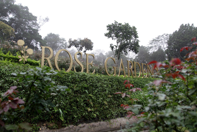 rose-garden-paragon-hill